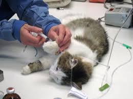 Veterinarska ambulanta IVAVET