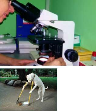 Slika 1. Mikroskopski pregled